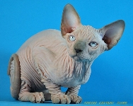SPHYNX JOSER CONNELL